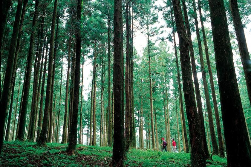 장수의숲길1