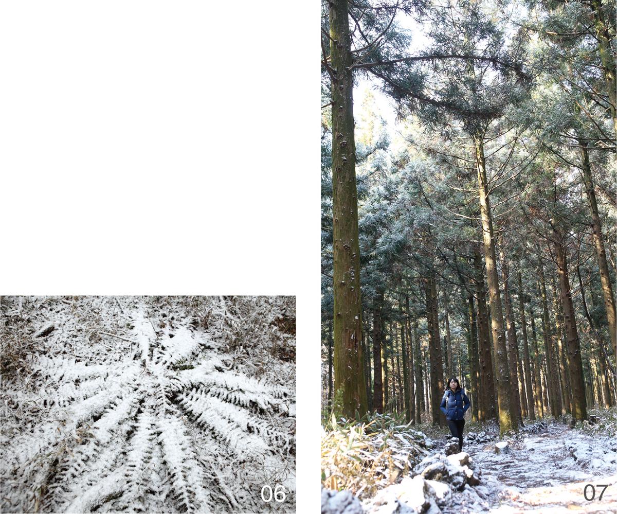 편백숲길4