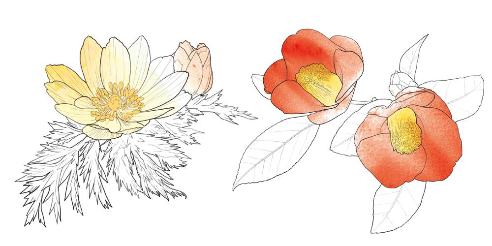 겨울식물1