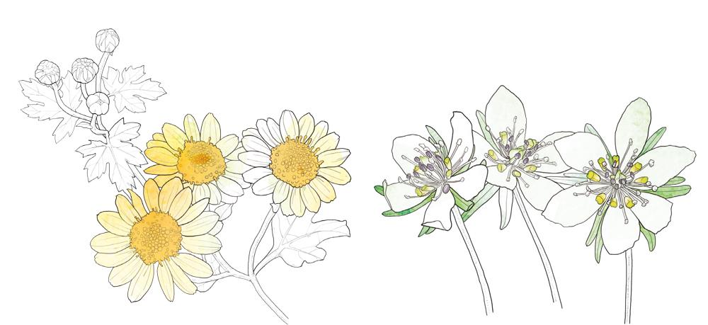 겨울식물2