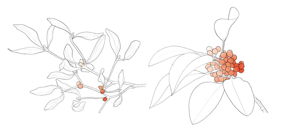 겨울식물4